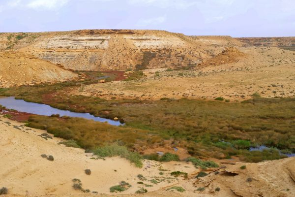 La courbine d'argant : région Akhfenir Maroc